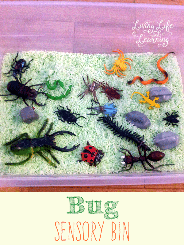 Great Bug sensory bin to learn about insects and have fun with them for bug lovers. A messy and fun project to keep preschoolers busy.