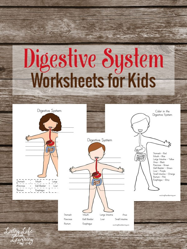 Teach your kids with these adorable Digestive System Worksheets with pages to label and color
