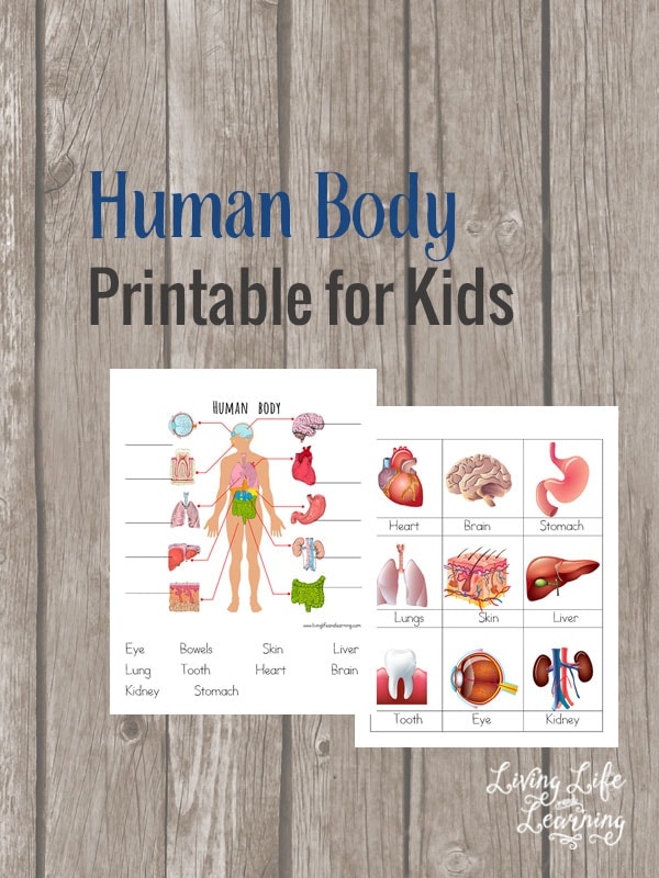 My son loves learning about the human body so we've jumped right into learning about the body with these human body printables for kids.