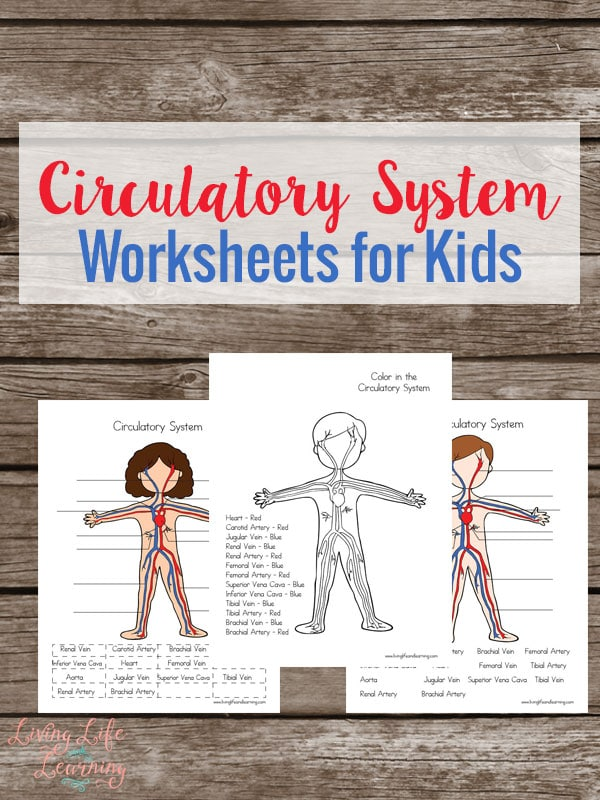 respiratory system worksheets for kids. Black Bedroom Furniture Sets. Home Design Ideas