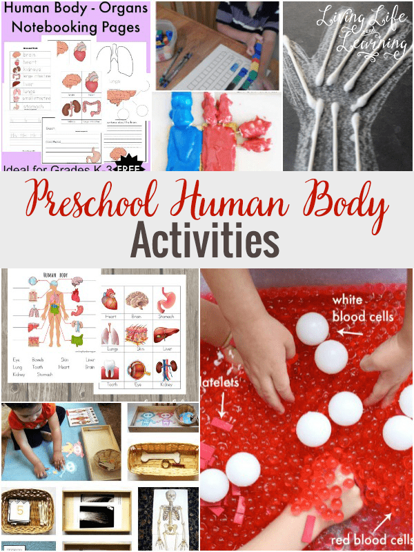 Preschool Human Body Activities