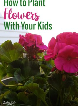 How to Plant Flowers with Your Kids