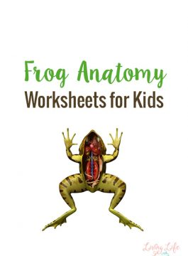 Frog Anatomy Worksheets for Kids
