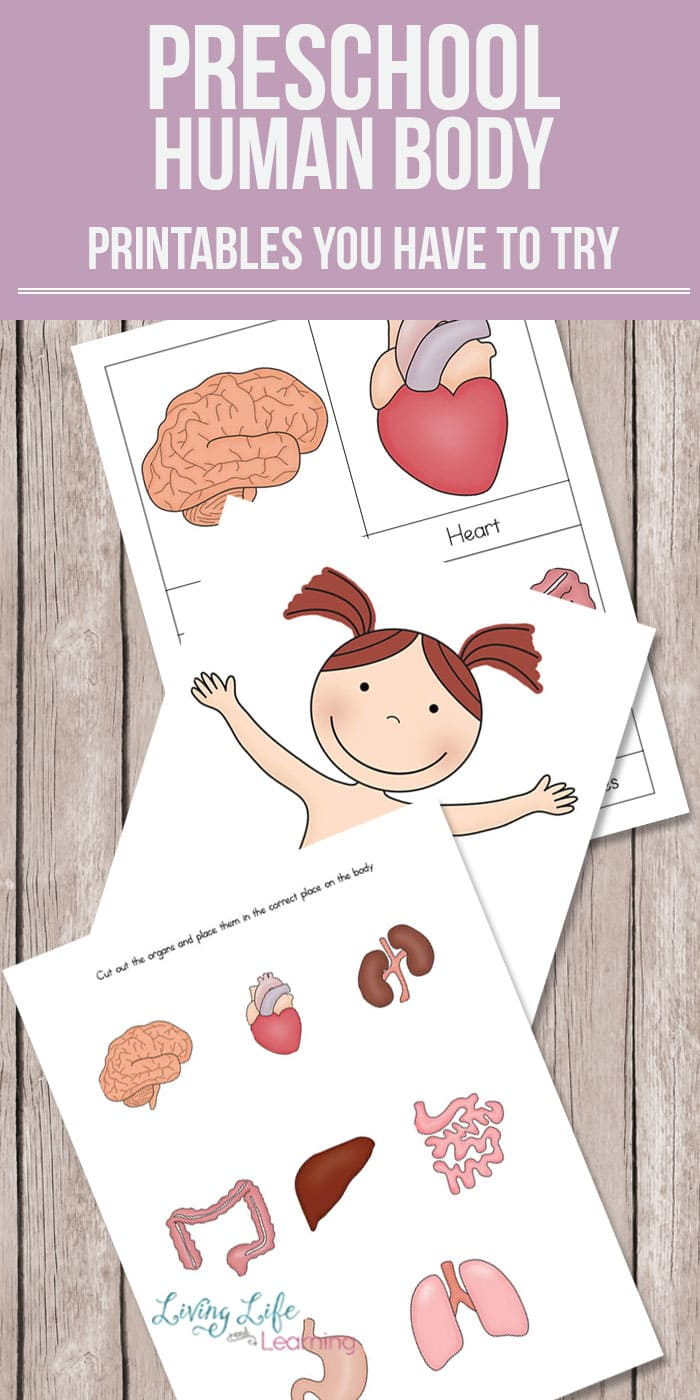 human body activities for preschoolers preschool human printables 737