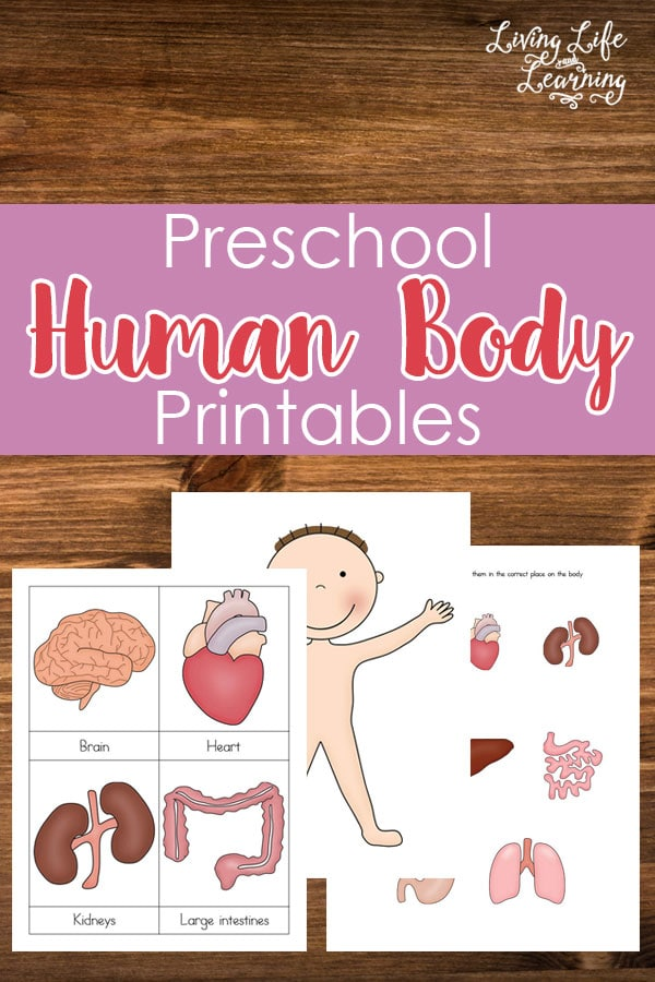 Want to learn about the human body but don't know where to start? Get these preschool human body printables to teach your kids now.