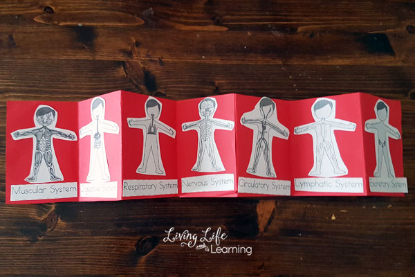 Human Body System Printables for Kids