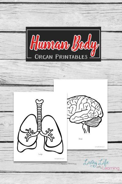 Human Body Organs Printables