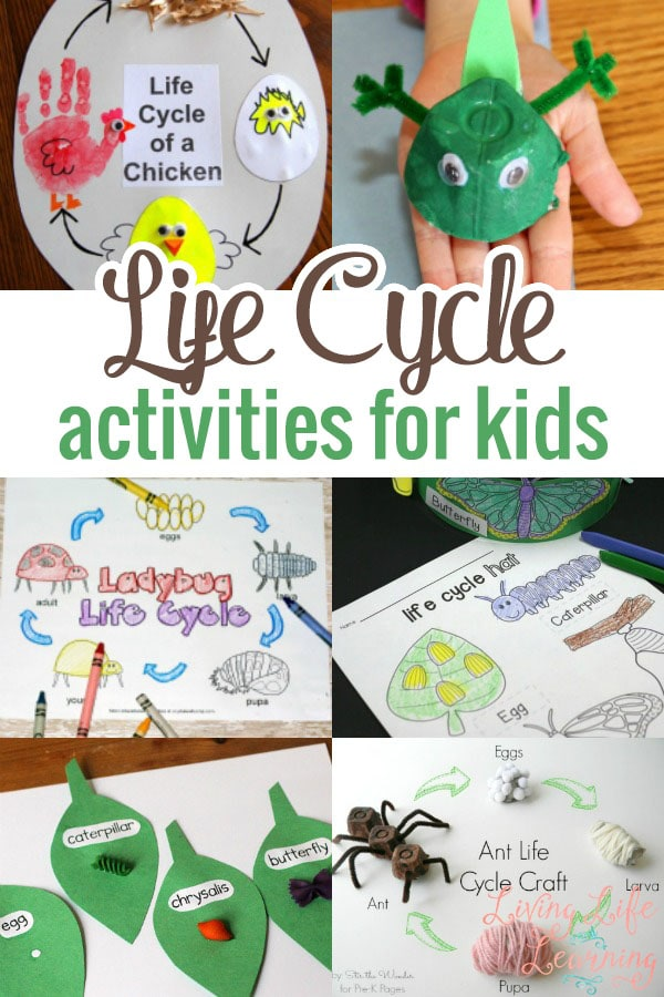 Animal life cycle for kids