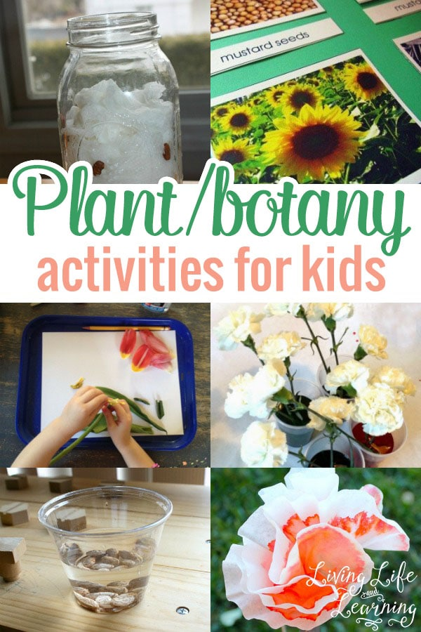 Plant and Botany Activities for Kids