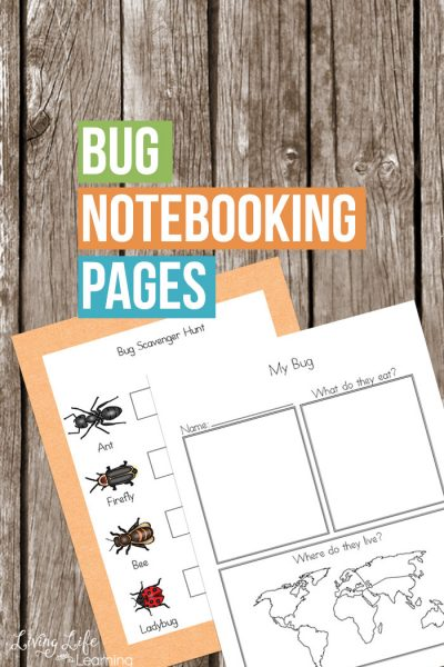 Bug Notebooking Pages
