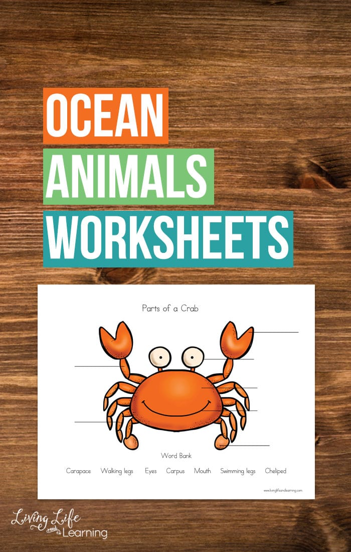 My son loves  ocean animals so I created these cute parts of ocean animals worksheets for him to get to know his favorite ocean animals.
