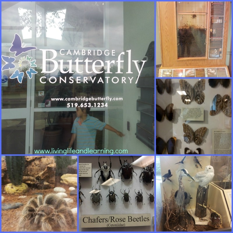 Cambridge Butterfly Conservatory Review