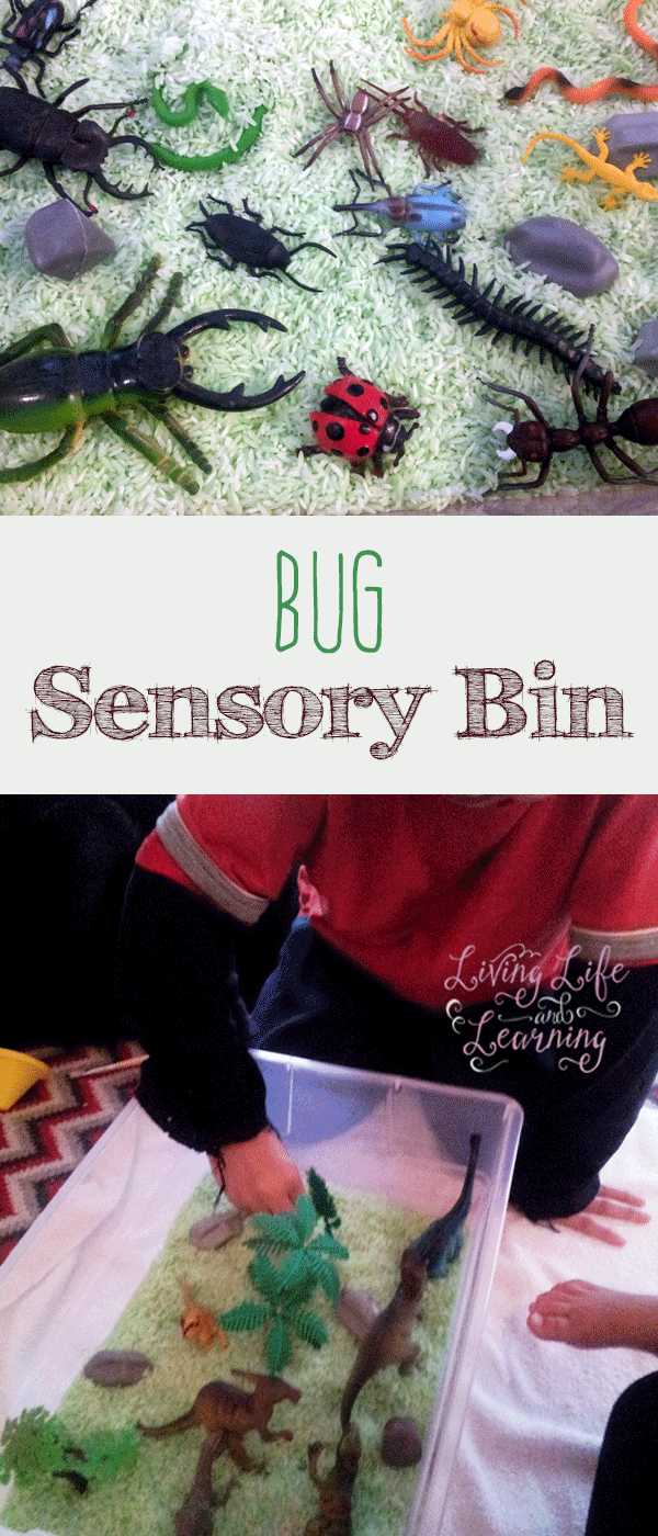 Simple insect sensory bin that provides tons of fun for preschoolers and a great treat for bug lovers