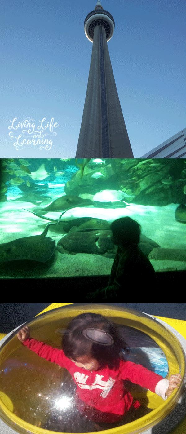 aquarium-long-2