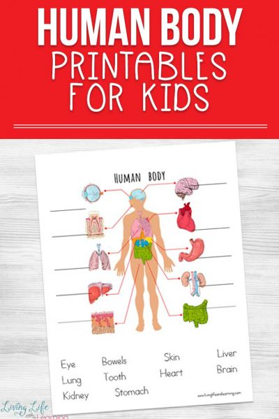 Human body printables for kids