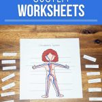 Want to know how the blood travels throughout your body? These circulatory system worksheets for kids will teach you all about how your body works and how your body receives oxygen.
