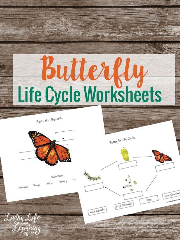 Learn all about the butterfly life cycle with these worksheets so you're prepared when you head outdoors and see them on your nature walks