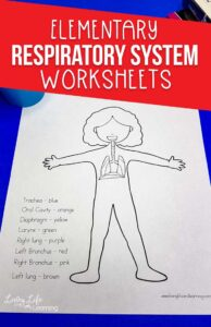 Respiratory system worksheets for kids