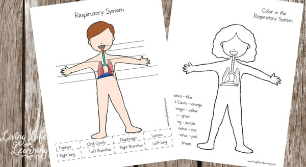 respiratory system worksheet for kids breadandhearth. Black Bedroom Furniture Sets. Home Design Ideas