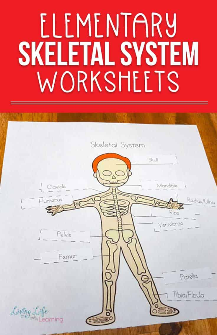 Is your child interested in the human body? Grab these skeletal system worksheets for kids to start learning about those bones.