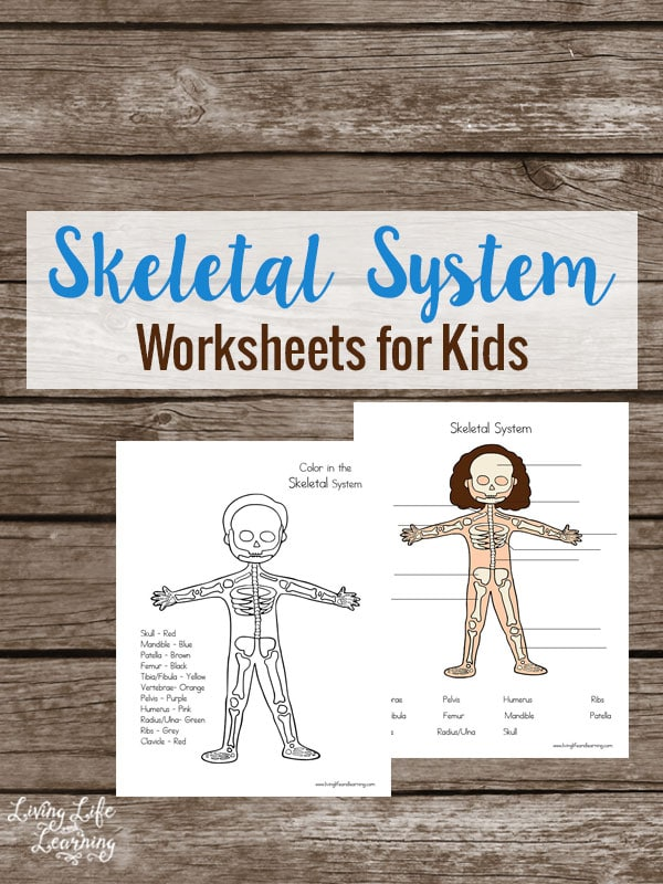 is your child interested in the human body grab these skeletal system worksheets for kids - Skeletal System Worksheet