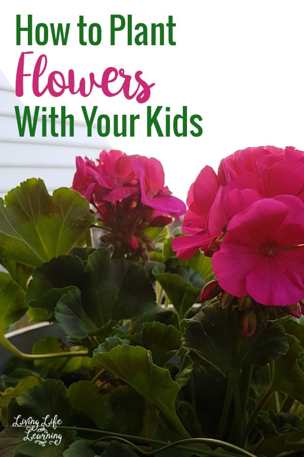 Get outside and learn How to Plant Flowers with Your Kids and give them a love of the outdoors while you put those screens away