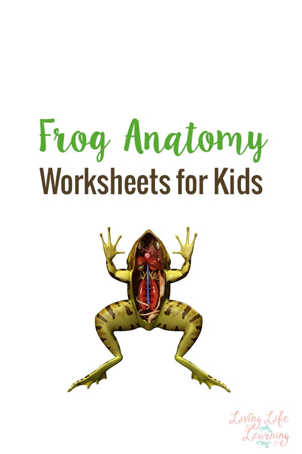 Frog Anatomy Worksheets for Kids