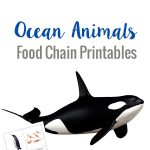 Learn about the top and bottom predators in the ocean with these ocean animals food chain printables
