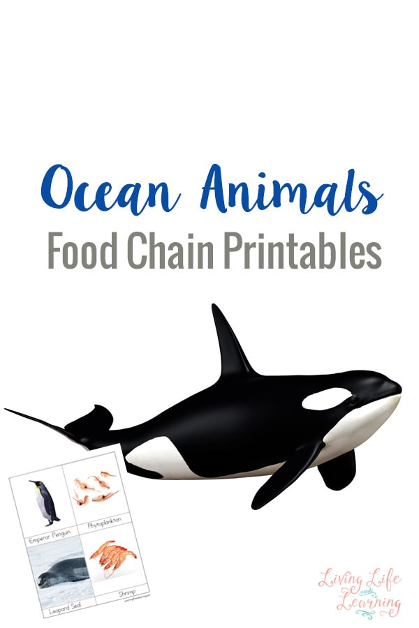 Ocean Animals Food Chain Printables. Learn About The Ocean Animals Food Chain With These Printables To Bring Into Your. Kindergarten. Where Animals Live Worksheets For Kindergarten At Clickcart.co