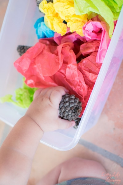 Looking for a non-messy boredom buster for your kids? This Toddler Play with Pinecones and Tissue Paper activity provided lots of sensory input and was quick to set up and clean up!