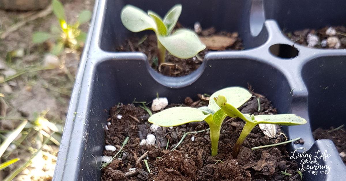 Gardening tips to save money - Money saving tips in gardening ...