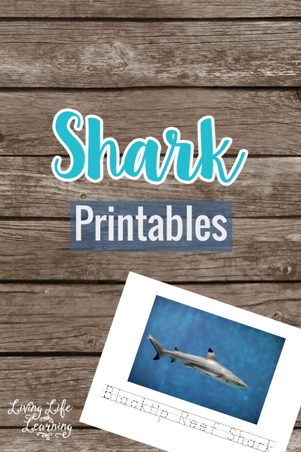 Get ready for shark week with these Shark Printables for Kids - learn to identify 7 different sharks and write their names.
