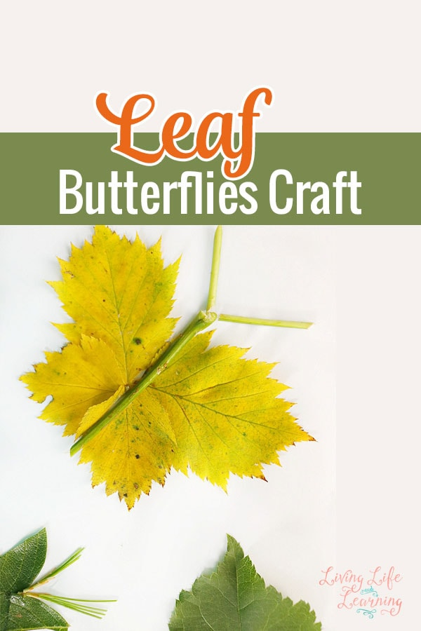 Collect leaves the next time you're taking a nature walk and create your own leaf butterflies craft with your kids