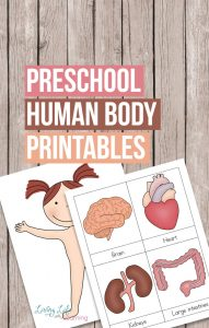 Want to learn about the human body but don't know where to start? Get these preschool human body printables to teach your kids about their bodies.