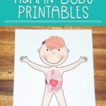 Preschool human body worksheets