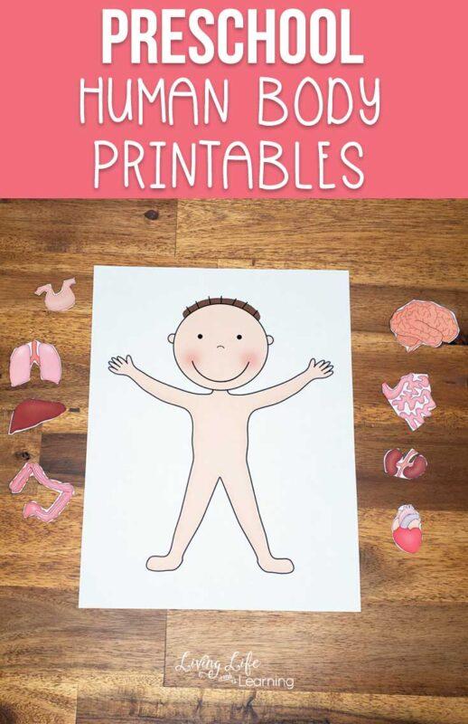 Preschool human body printables