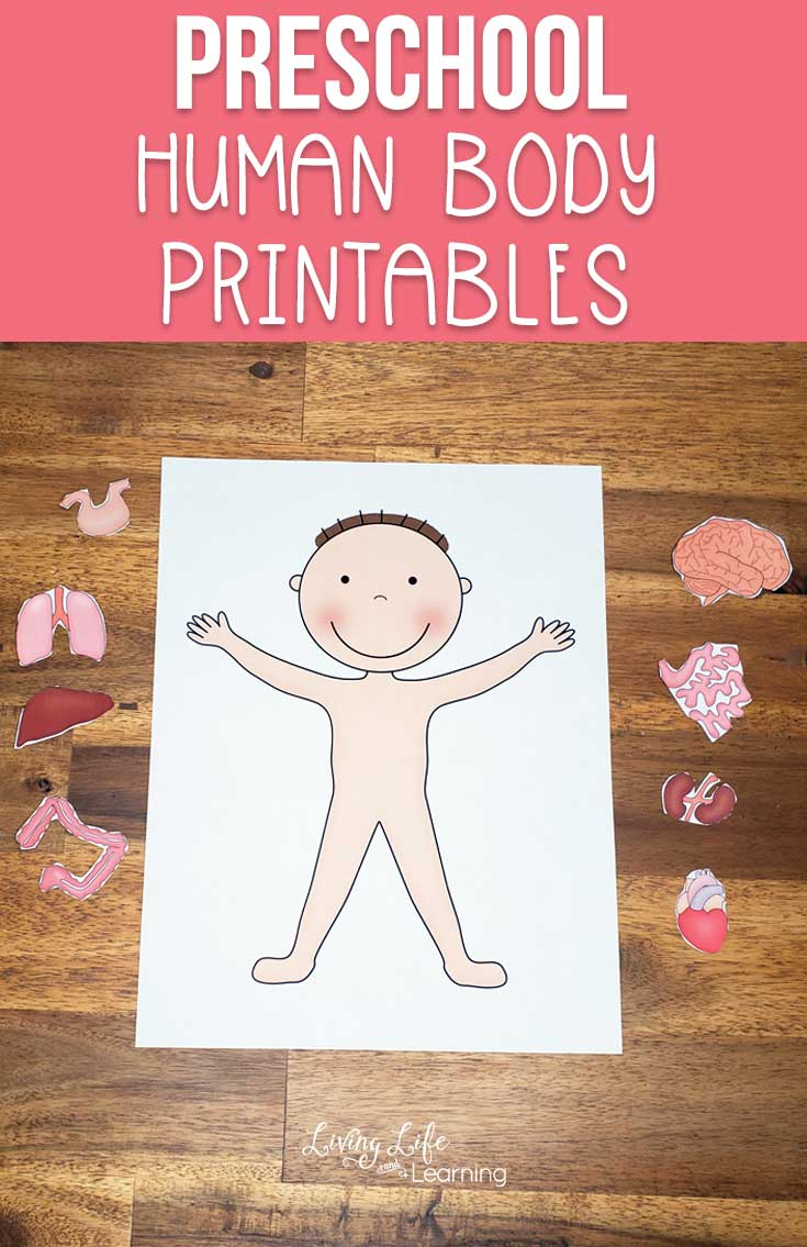 Preschool Human Body Printables