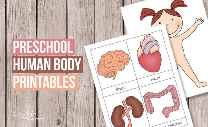 Preschool human body printables preschool human body printables fbg ccuart Image collections