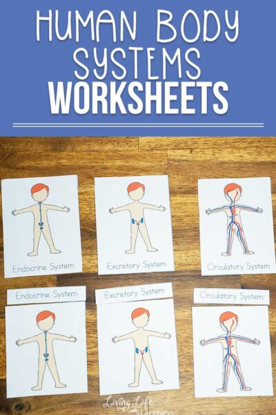 human body system worksheets for kids