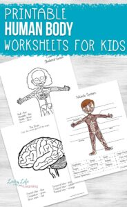 Printable human body worksheets for kids