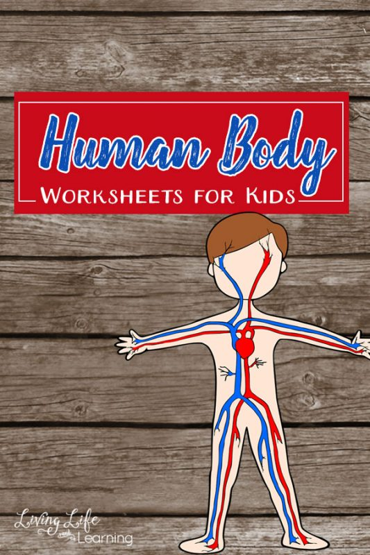 Try these cool human body worksheets for kids. These science worksheets will introduce the human body organs and their functions to your kids in an engaging and fun way.