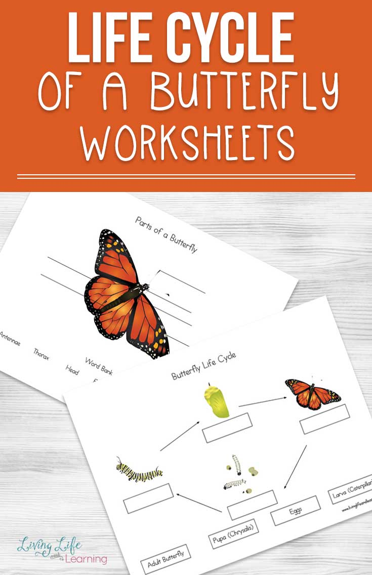 Use these cute life cycle of a butterfly worksheets so you're prepared when you head outdoors and see them on your nature walks. Learn all about how they grow from an egg, to a caterpillar and then onto a gorgeous butterfly.