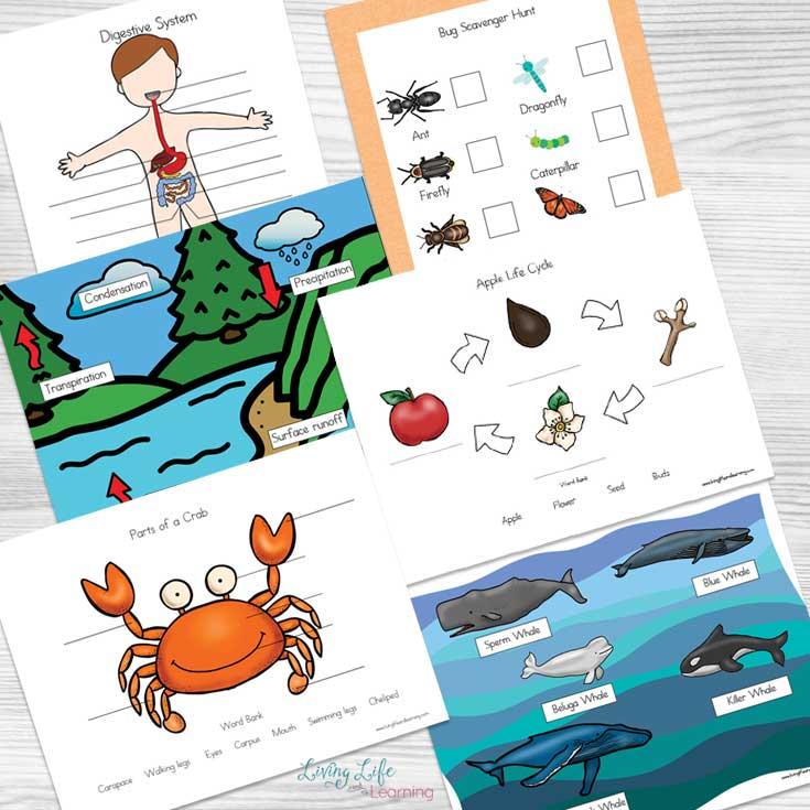 fun printable science worksheets kids will love