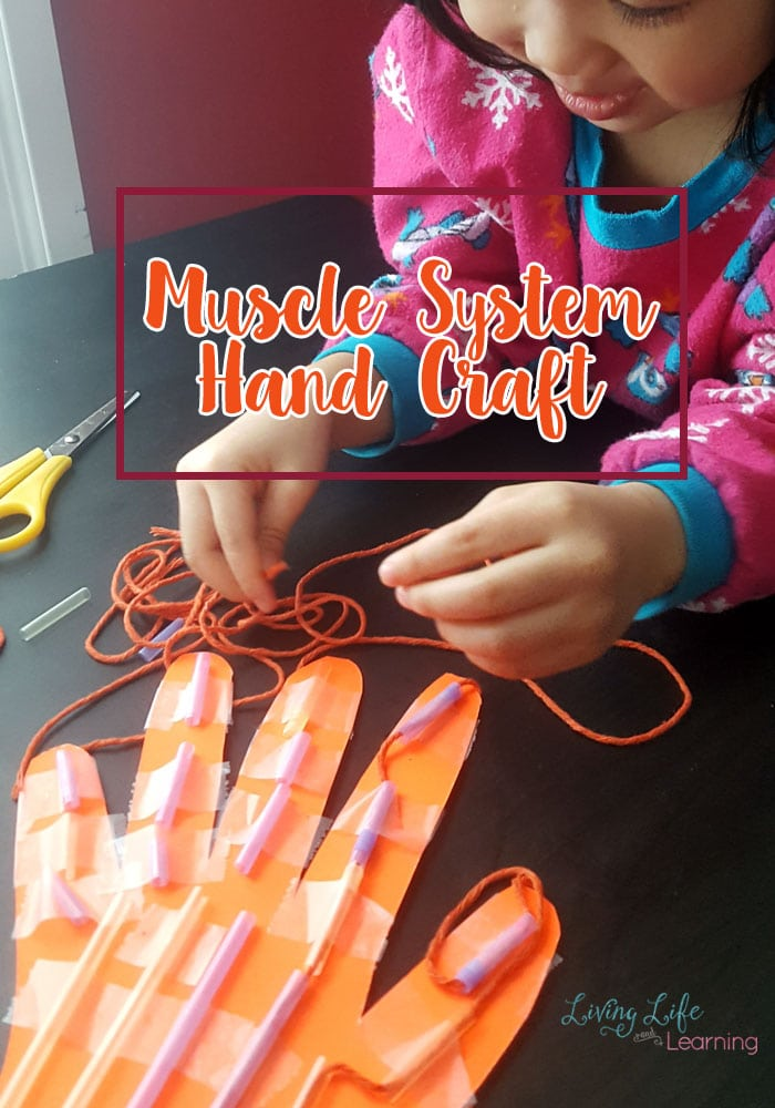 Learn all about the muscle system with this muscle system hand craft for kids. Make science come alive by seeing how the hand works as it moves.