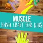 Muscular System hand craft for kids