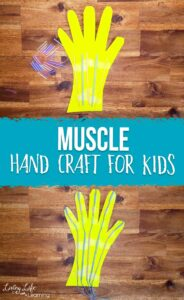 Muscle system hand craft for kids