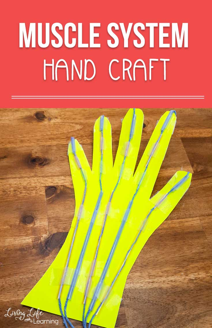 Awesome Muscular System Hand Craft For Kids