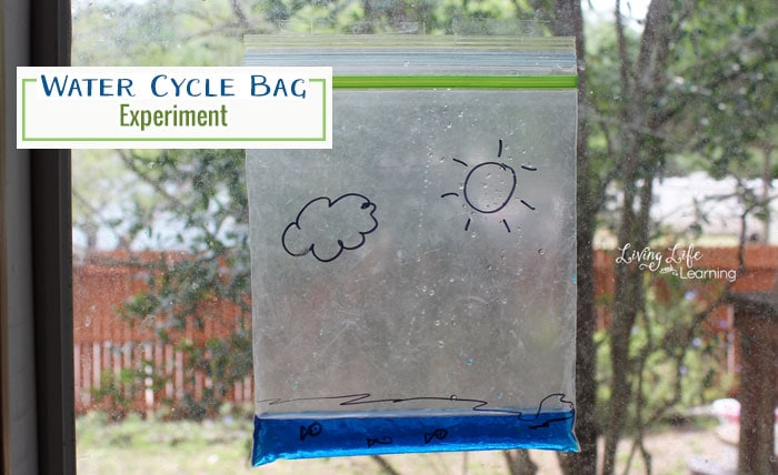 Learn more about the water cycle - This water cycle bag experiment will show how the water cycles from our lakes to the clouds in a visual way for kids