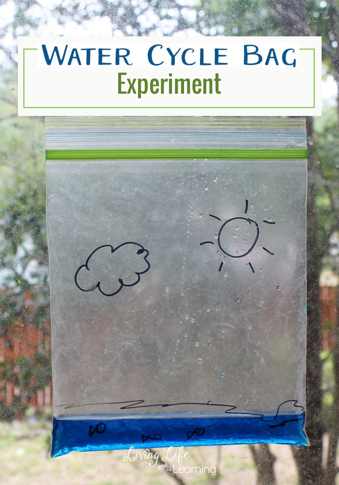 A Captivating Water Cycle Bag Experiment For Kids Of All Ages