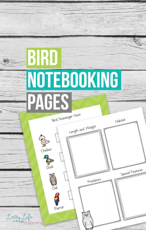 Learn more about your favorite birds with these free bird notebooking pages, a wonderful way to record the new information on your birds.